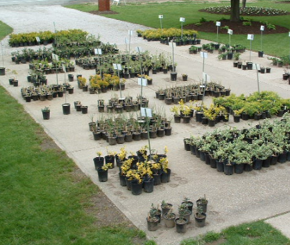How To Start A Profitable Plant Nursery Business In 2019